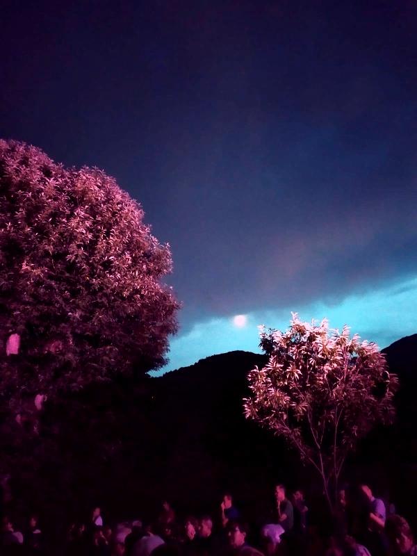 incantati-nel-bosco-2019-02